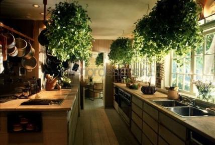 Картины с живыми растениями своими руками фото 798
