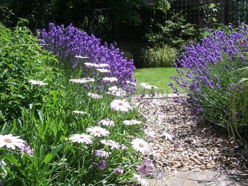 освежать внешний вид сада.