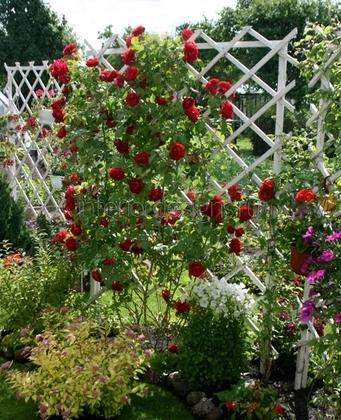 трельяж для сада