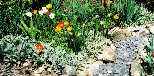 низкорослые растения и цветы