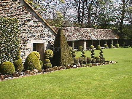 зеленые насаждения возле дома