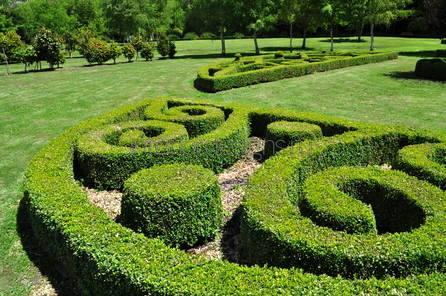 посадка растений в саду