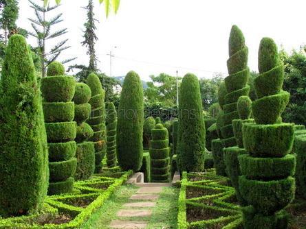 прогулочная аллея в саду