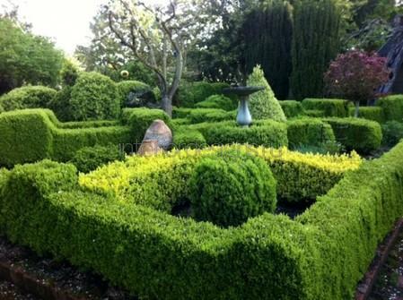 лабиринты из зелени