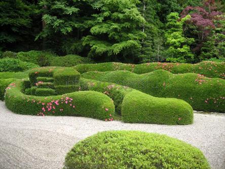 садовый участок с топиарием