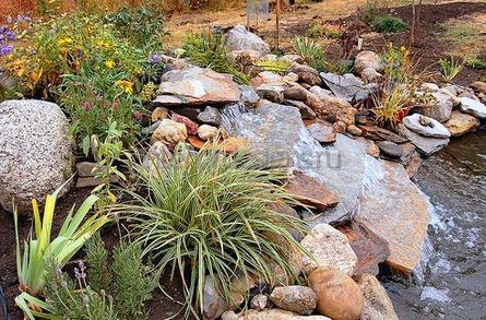 растения для каменных горок