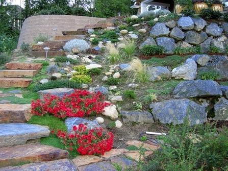почвопокровные цветы возле дома
