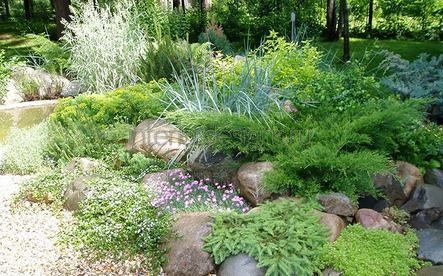 низкорослые кустарники в саду