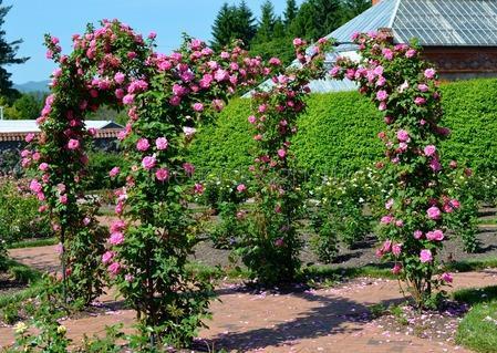 декоративные арки с розами