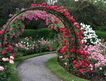 красивые арки из цветов