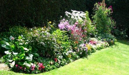 подбор растений для сада