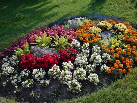 цветы-однолетники
