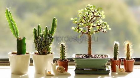 кактусы в доме