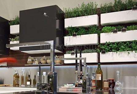 растения в кухонных помещениях