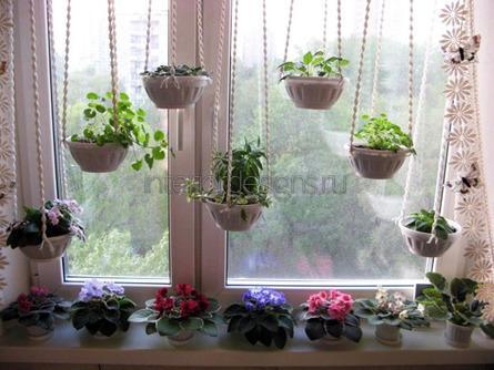 комнатные цветы в кашпо