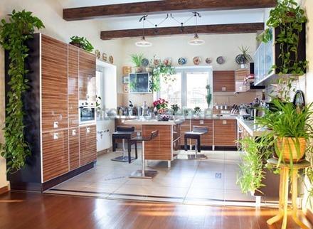 украшение квартиры зелеными насаждениями
