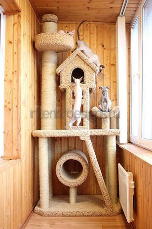 размещение в квартире домика для кошек