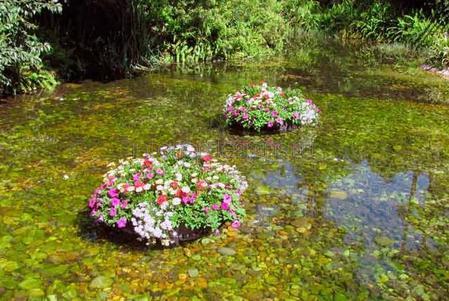 Растения на воде