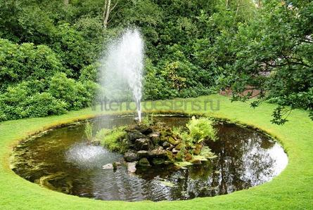 растения для домашнего пруда