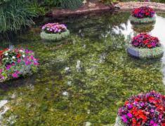 дизайн водоема в саду